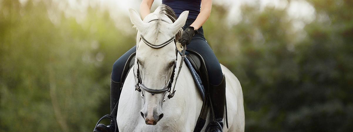 Promujemy dobre jeździectwo